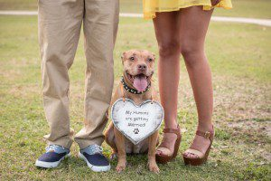 Tips for bringing your dog to the engagement session from pro orlando photographer