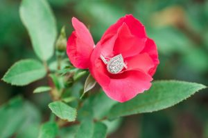Close up of the engagement ring on a rose during a surprise proposal at Disney resort in Orlando, Florida